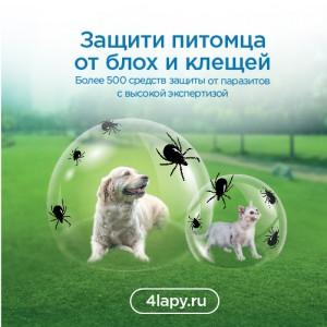 Profiessionalnaia-siet-tovarov-dlia-zhivotnykh-Chietyrie-lapy-zapuskaiet-Proghrammu-zashchity-pitomtsiev_1