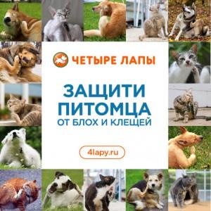 Profiessionalnaia-siet-tovarov-dlia-zhivotnykh-Chietyrie-lapy-zapuskaiet-Proghrammu-zashchity-pitomtsiev_2