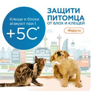 Profiessionalnaia-siet-tovarov-dlia-zhivotnykh-Chietyrie-lapy-zapuskaiet-Proghrammu-zashchity-pitomtsiev_3